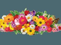 دانلود عکس با کیفیت png گل