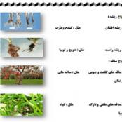 تحقیق انواع قسمت های گیاهان همراه با جزئیات