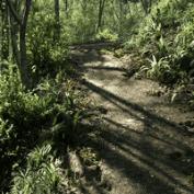 آموزش ساخت گیاه در مایا توسط منتال ری Gnomon Workshop – Forest 2019
