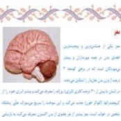 تحقیق درباره مغز