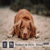 پریست لایتروم World of Pets Dogs Lightroom Presets