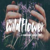 فونت Wildflower Font